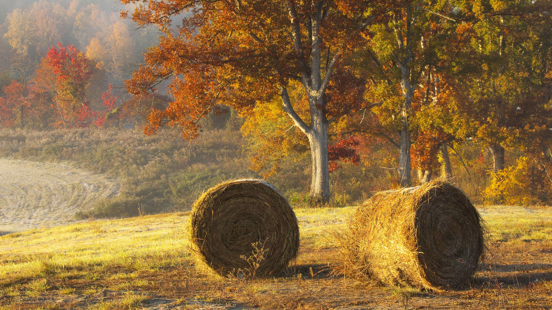 Beautiful Hay Bails In Field wallpaper