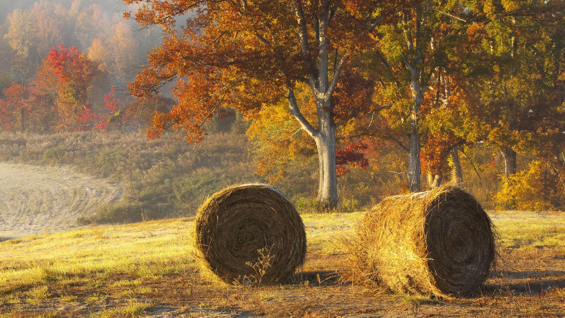 Beautiful Hay Bails In Field wallpaper