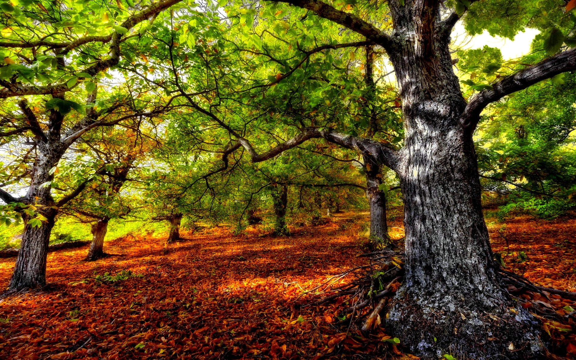 Beautiful HDR Forest Wallpaper