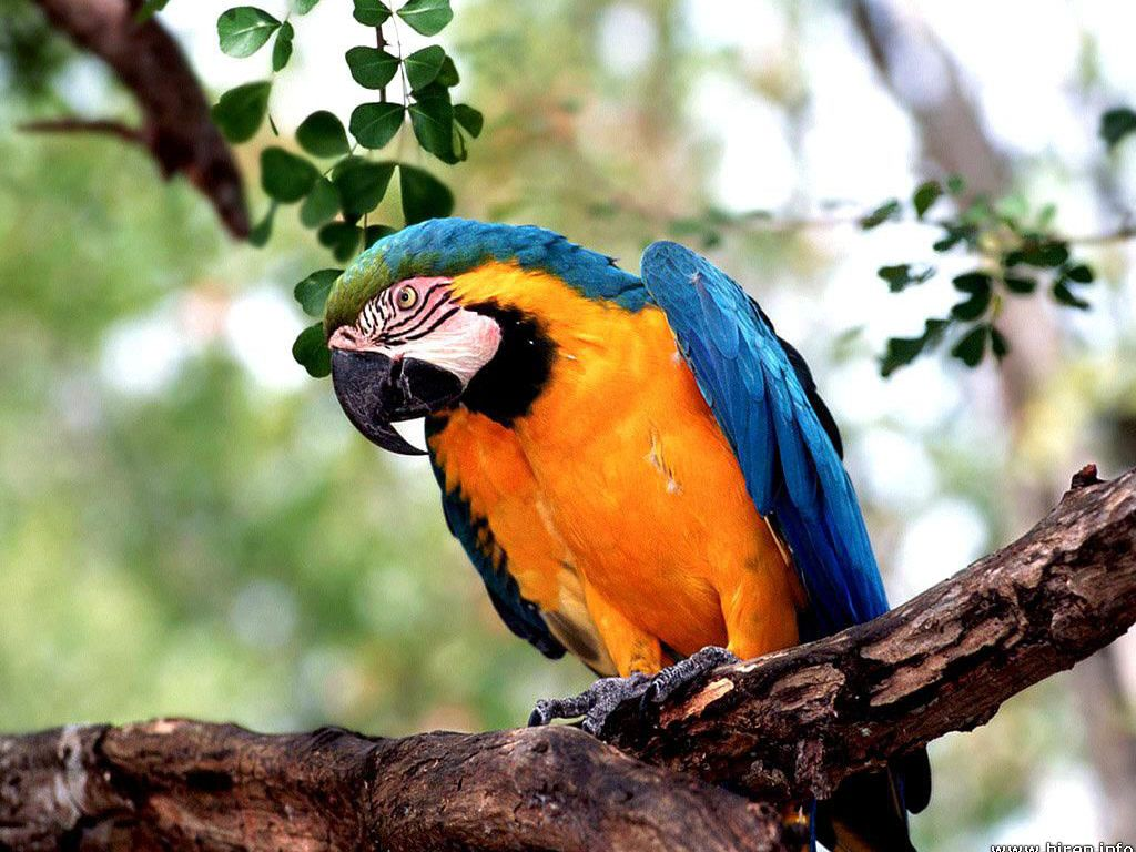Beautiful Macaw Wallpaper