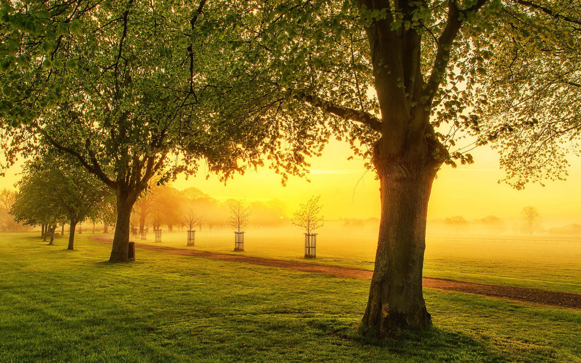 Beautiful Morning Fog Wallpaper