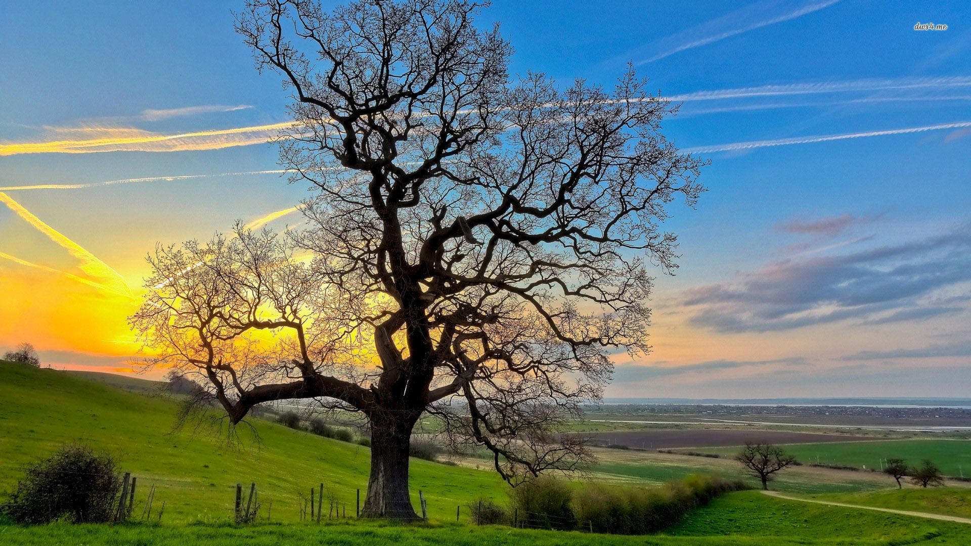 Beautiful Oak Tree Wallpaper