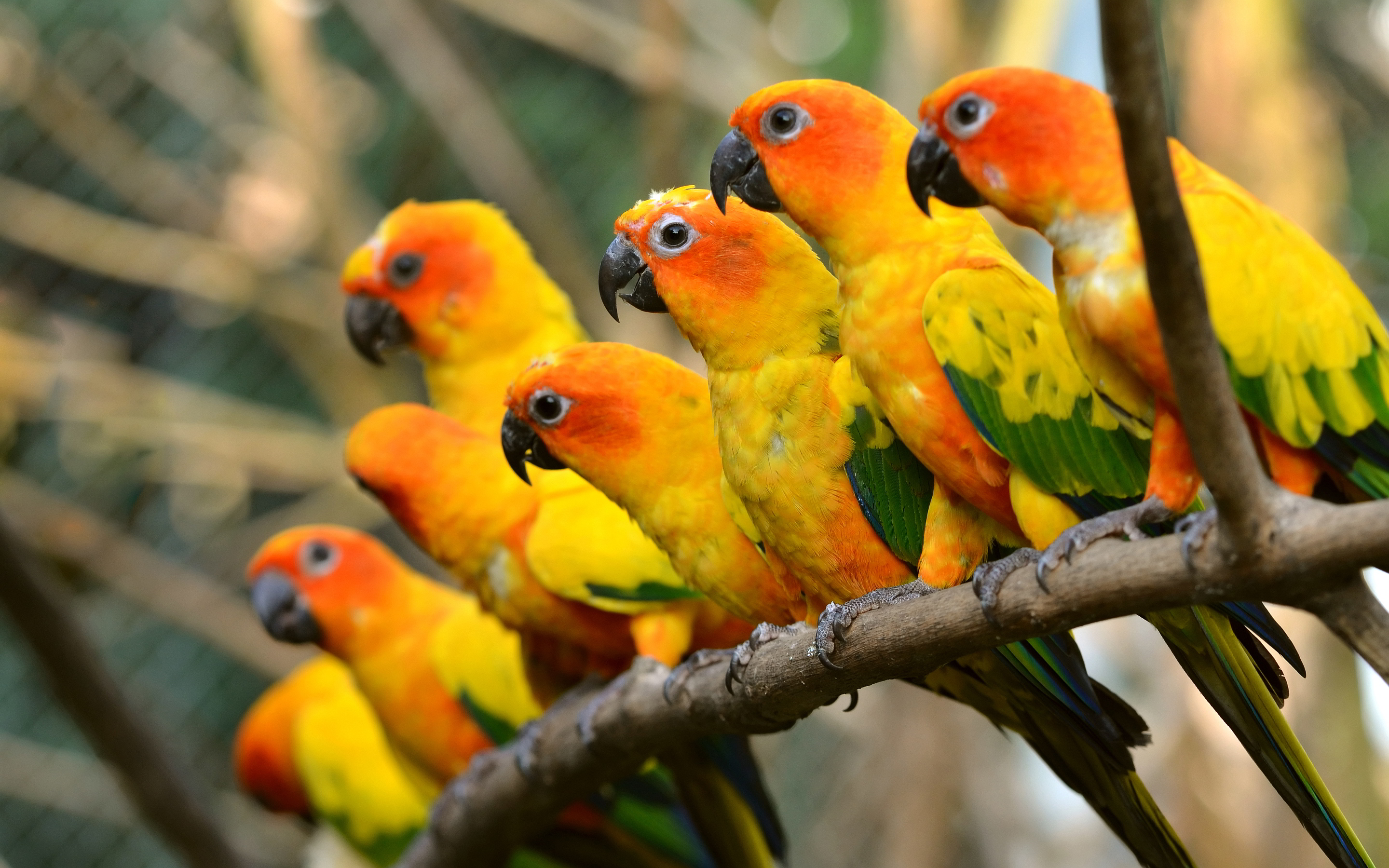 Beautiful Parrot Wallpaper 16052