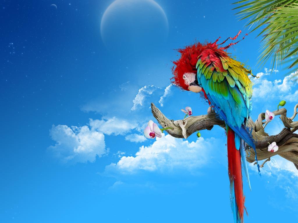 Beautiful Parrot Wallpaper