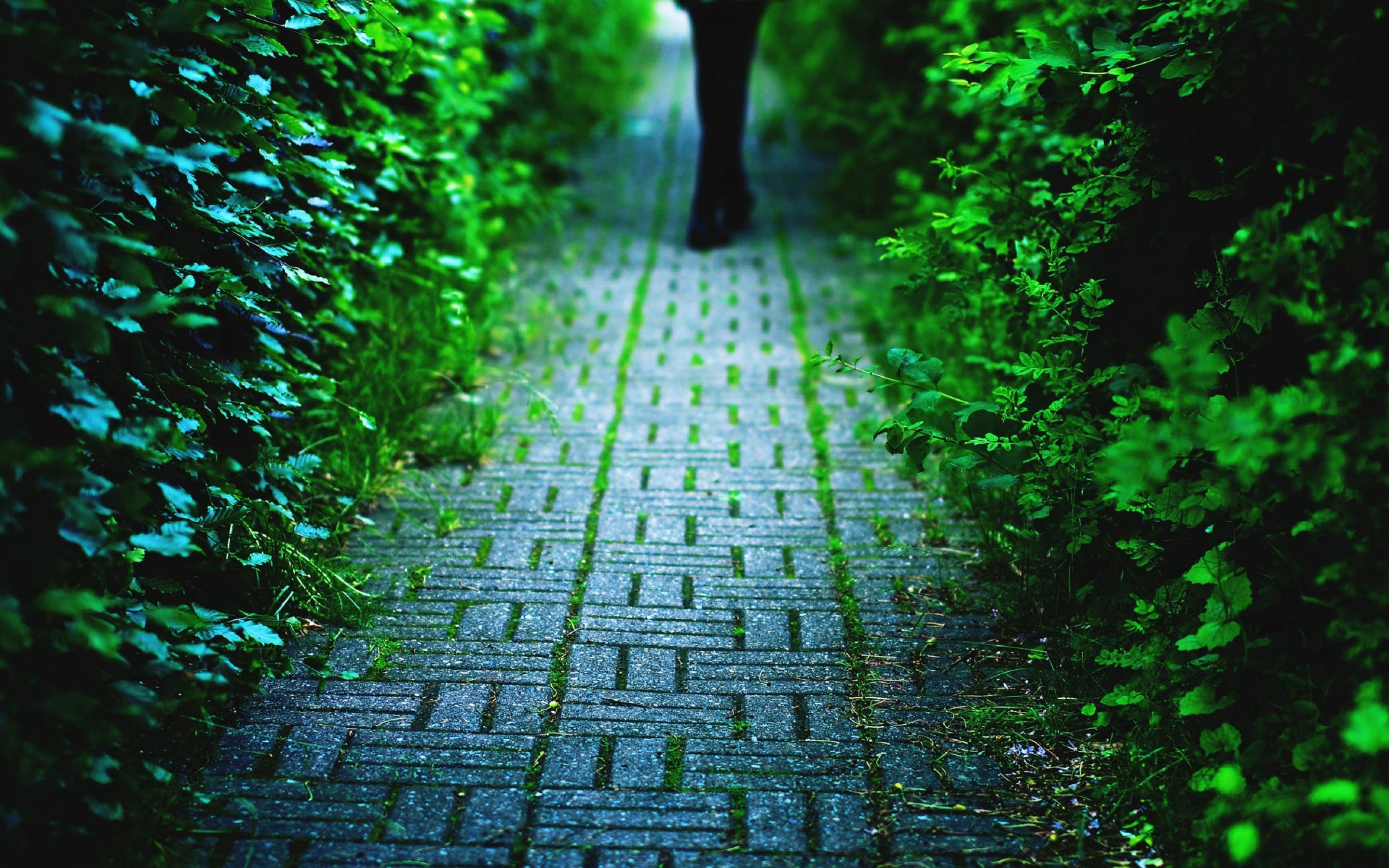 Beautiful Pavement Wallpaper