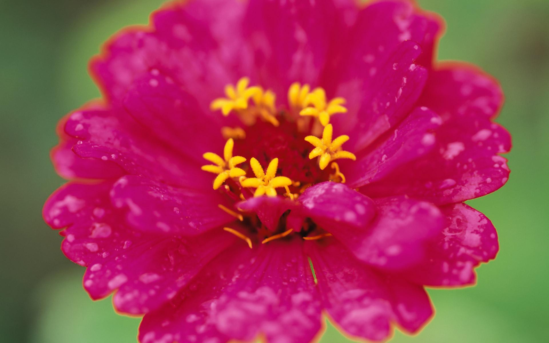 Beautiful Pink Flowers