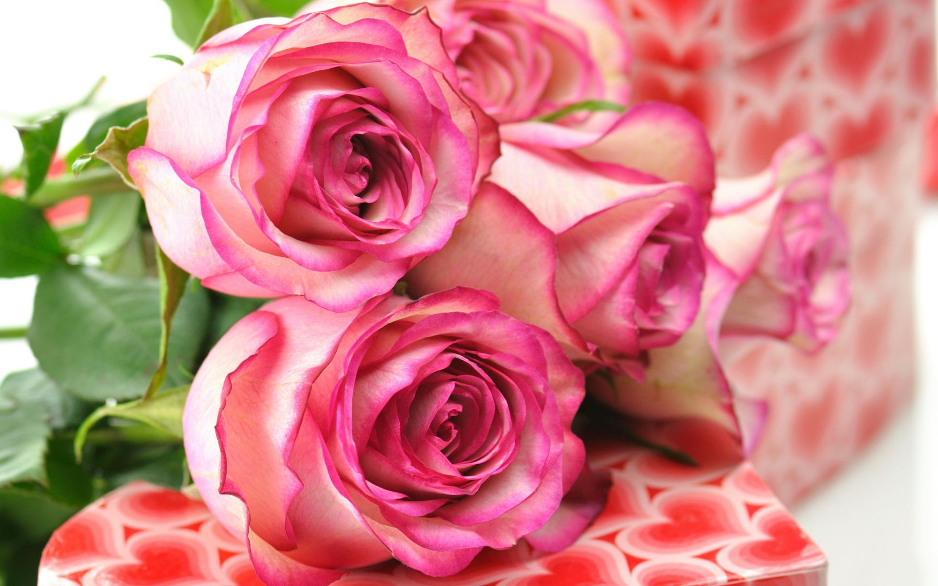 Beautiful Hd Pink Roses
