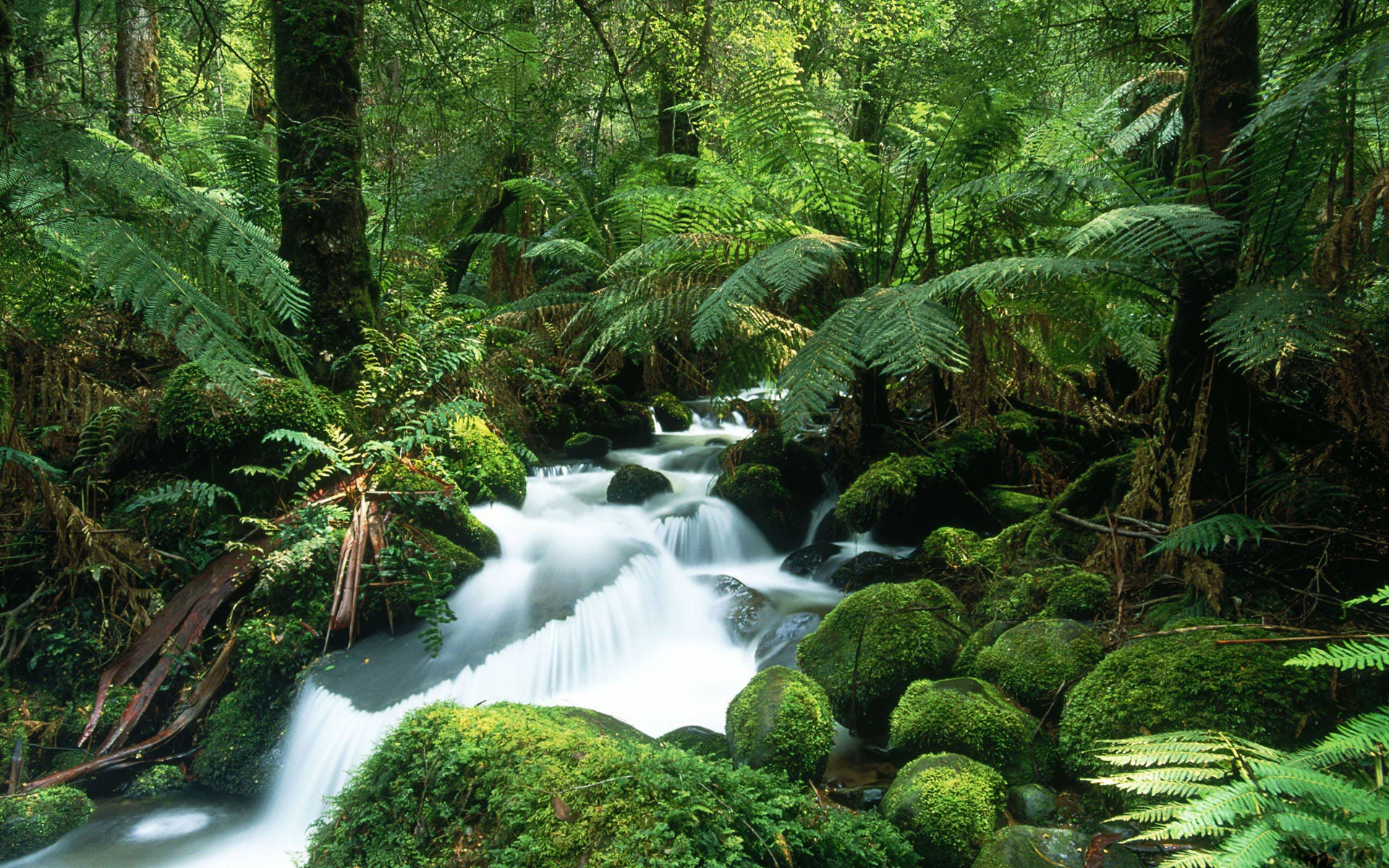 Beautiful Rainforest Wallpaper 24472