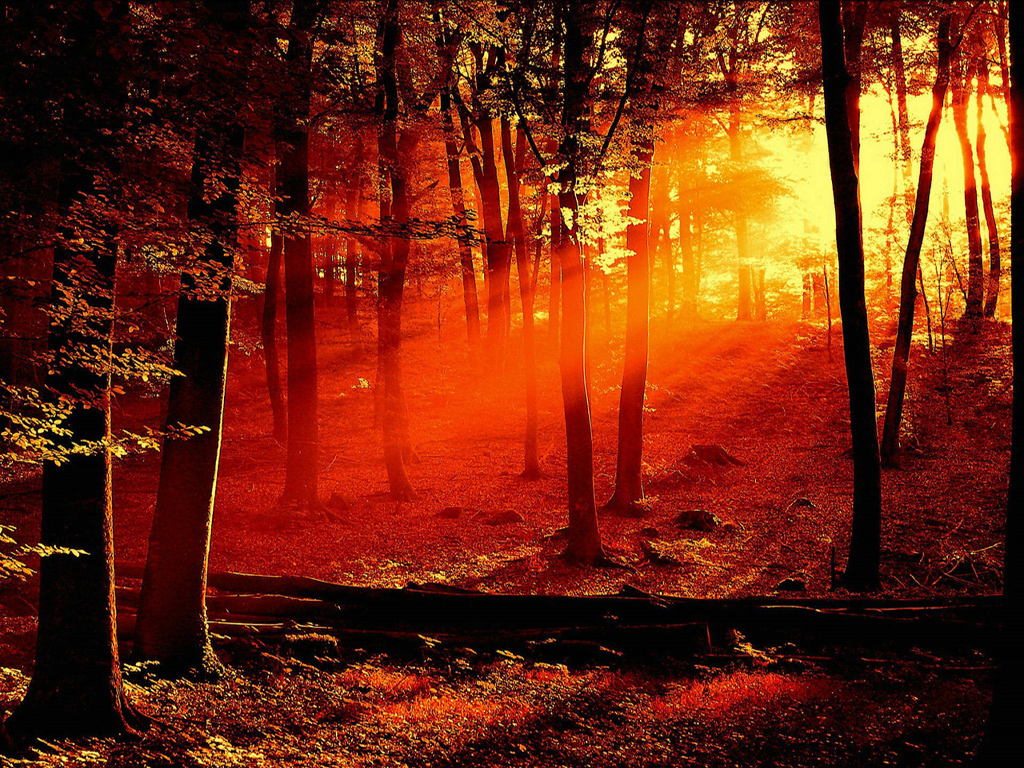 Beautiful Red Forest Wallpaper