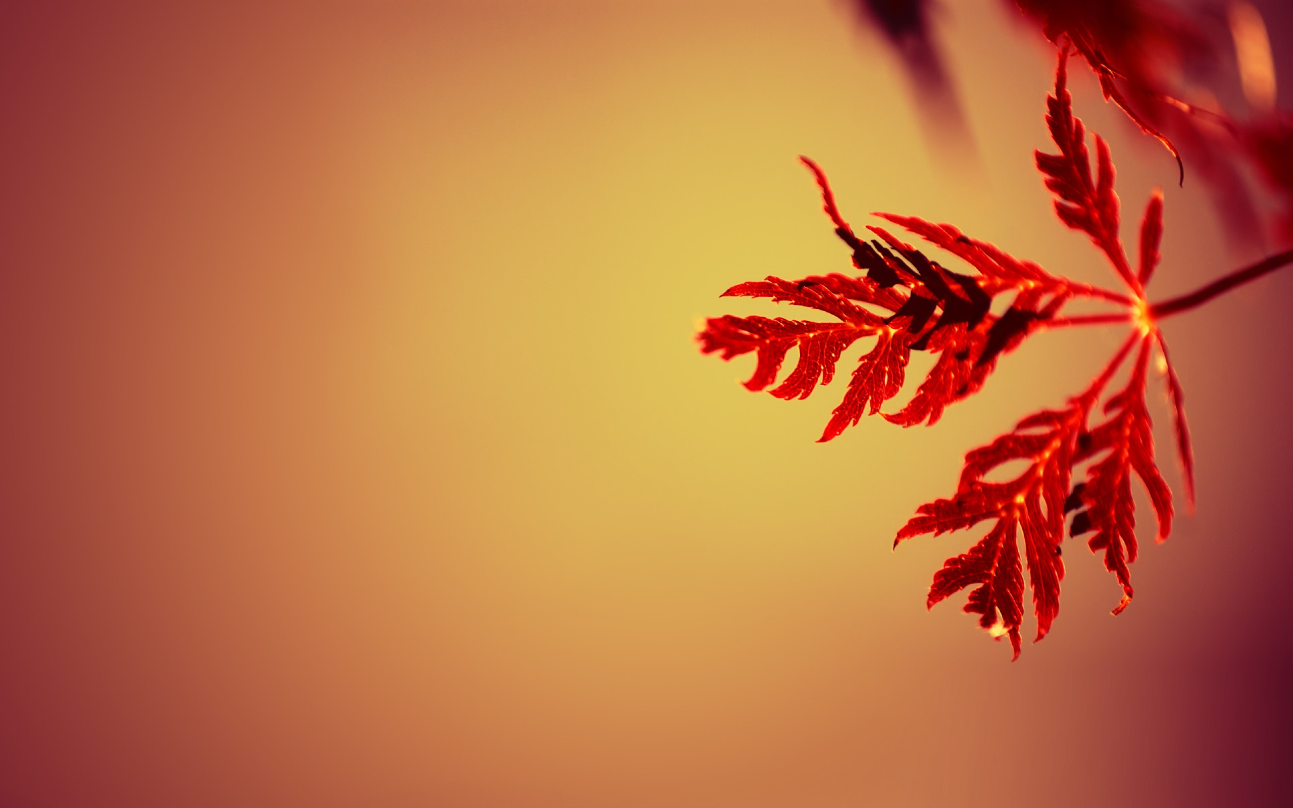 Beautiful Red Leaves Wallpaper