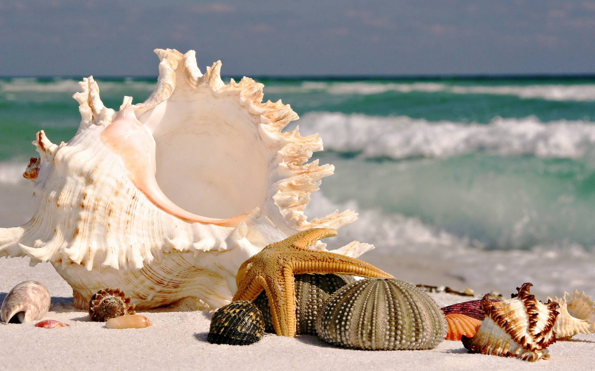 Beautiful Seashell Wallpaper