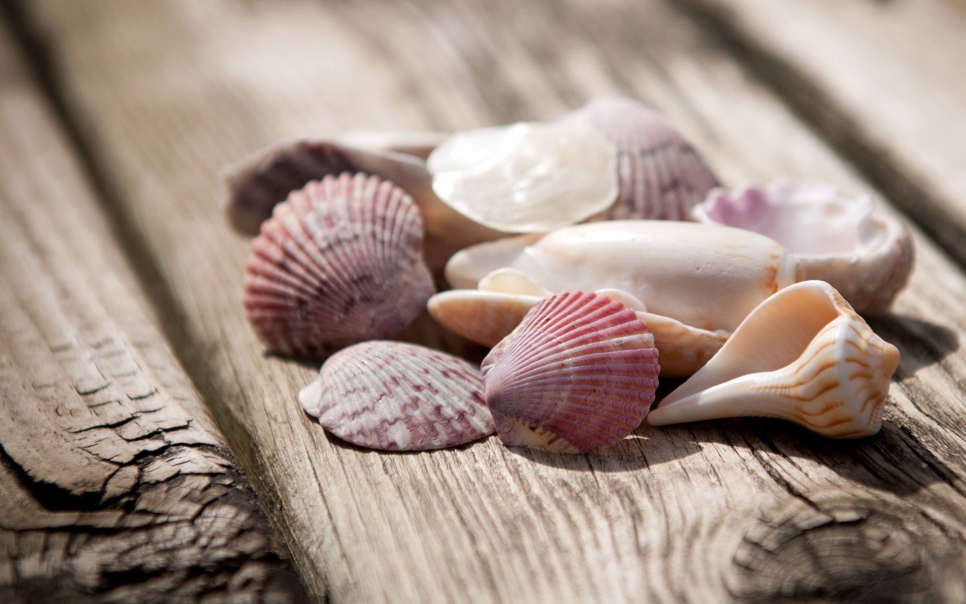 Beautiful Shells Wallpaper
