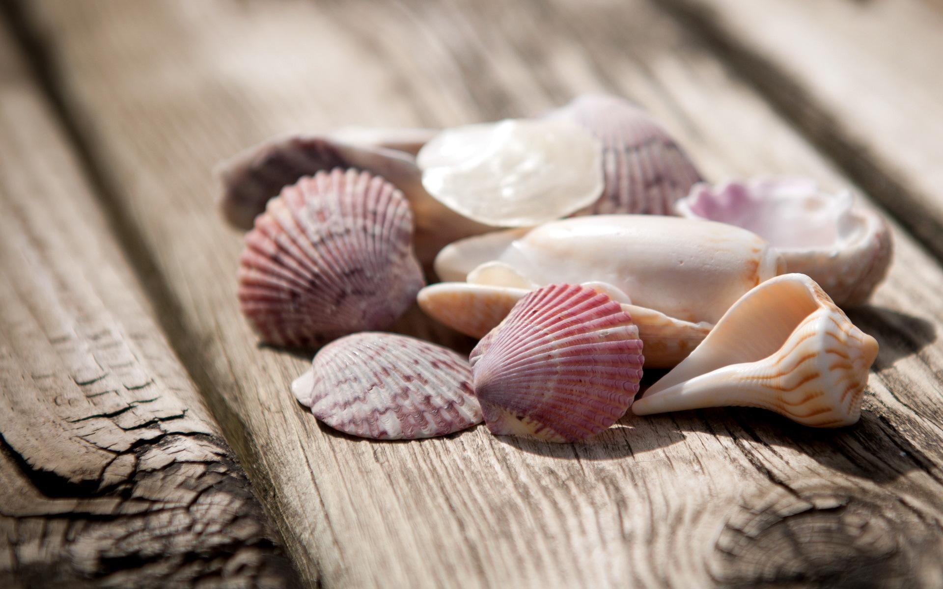 Shells Wallpaper · Shells Wallpaper ...