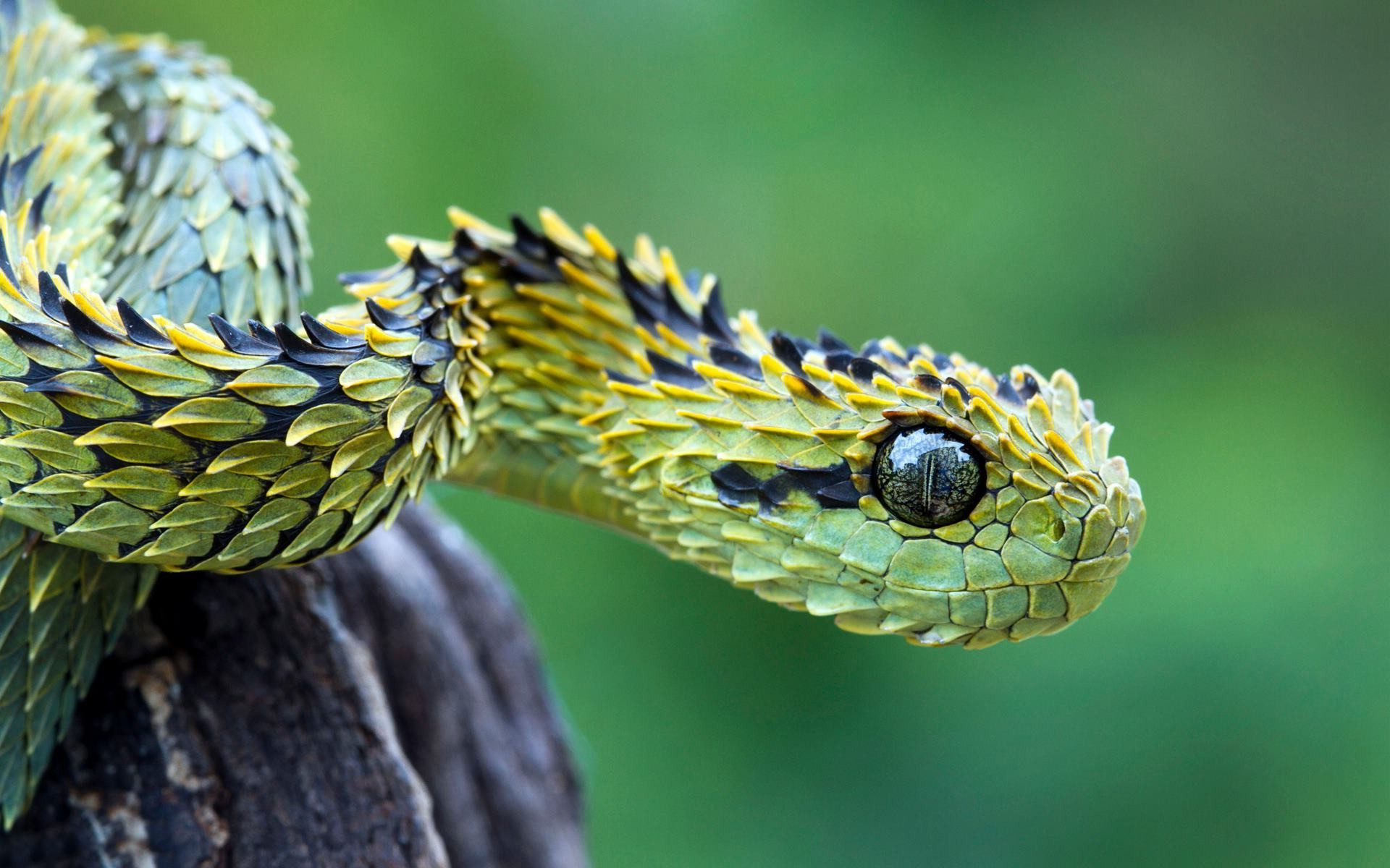 Beautiful Snake Wallpaper