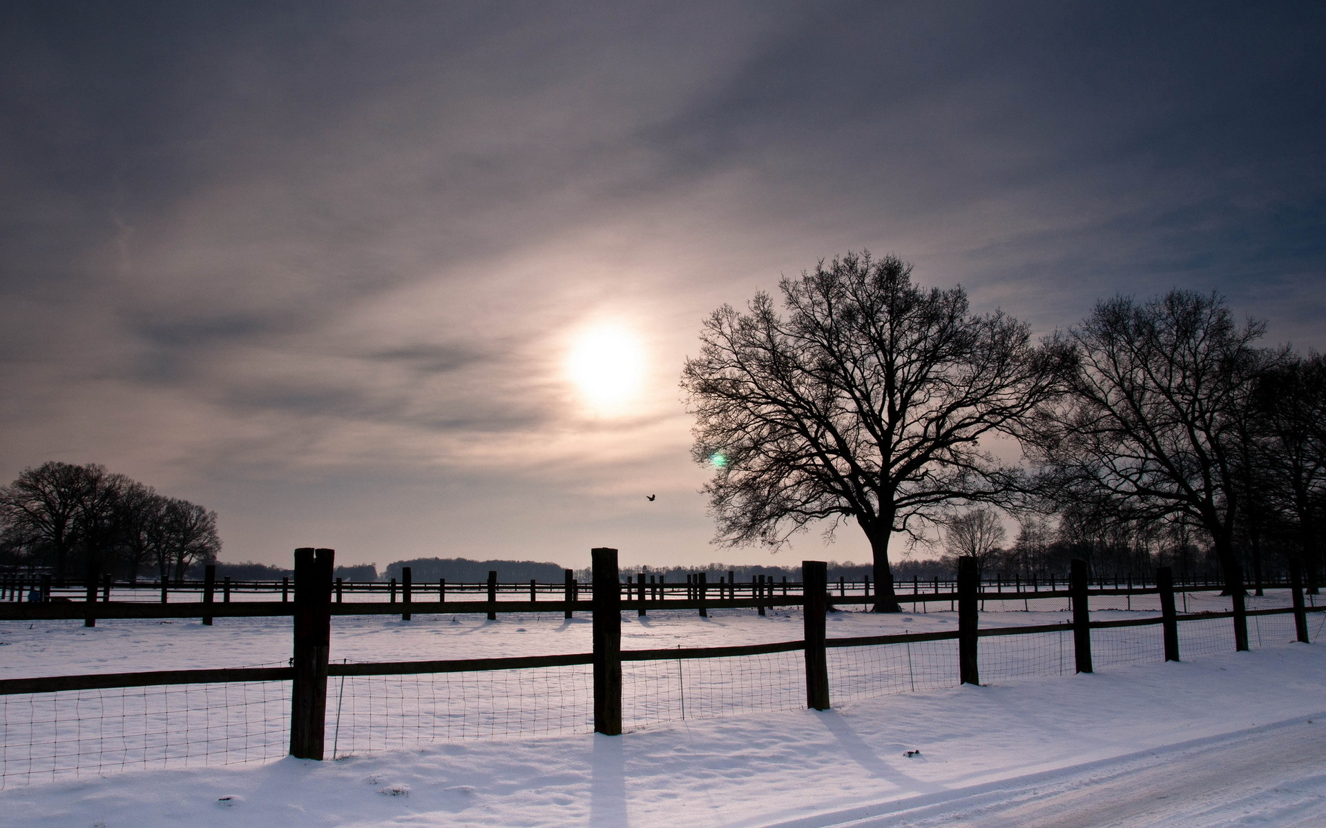 Beautiful Snow Fence Wallpaper