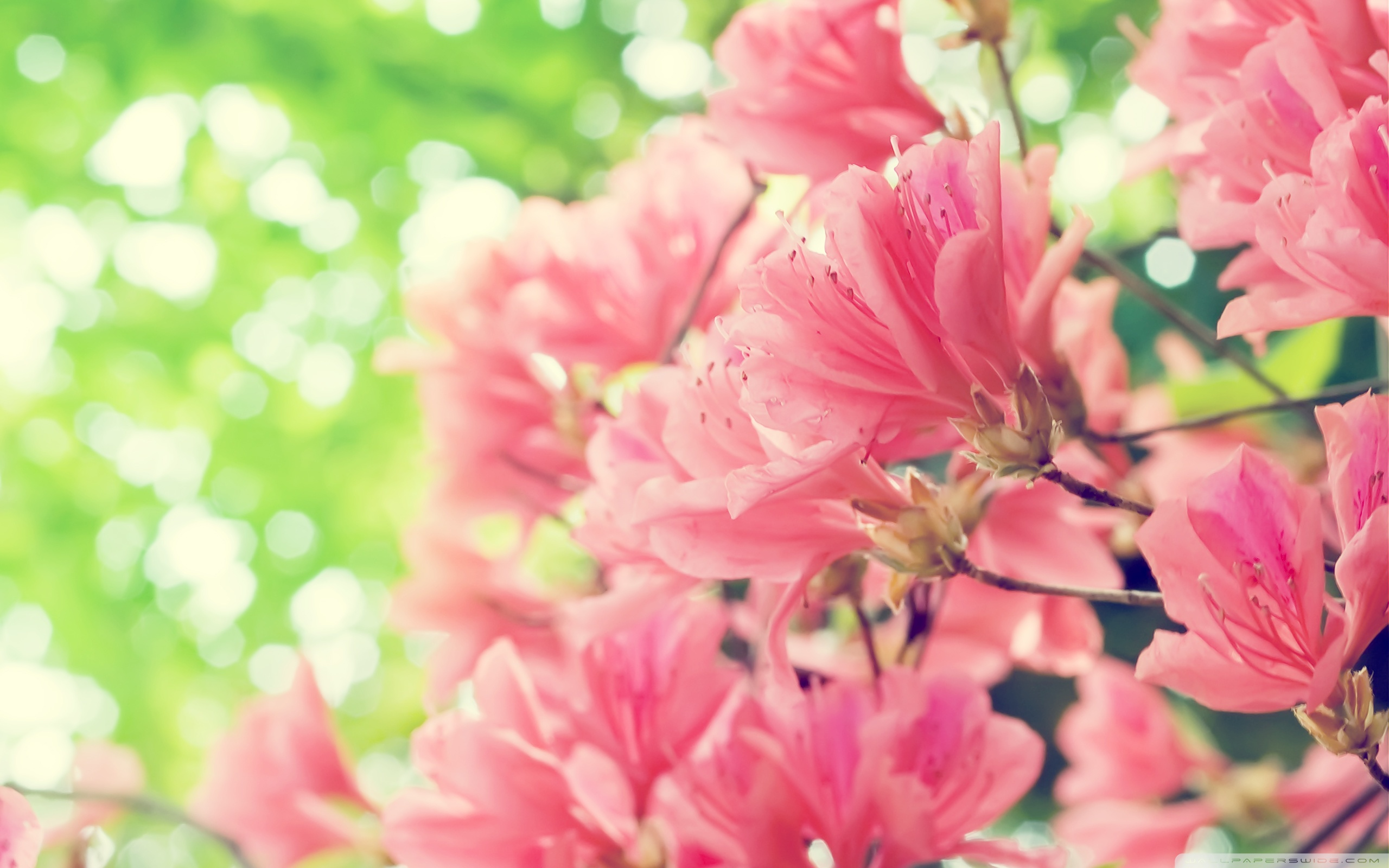Beautiful Spring Flowers Wallpaper