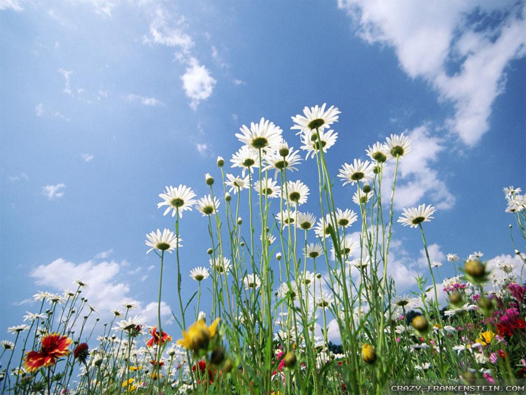 Wallpaper: Sky Glade Beautiful Spring