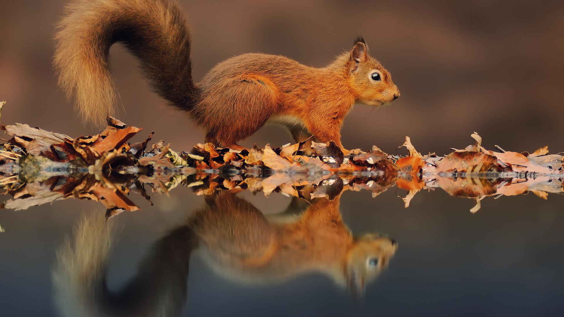 Beautiful Squirrel Wallpaper
