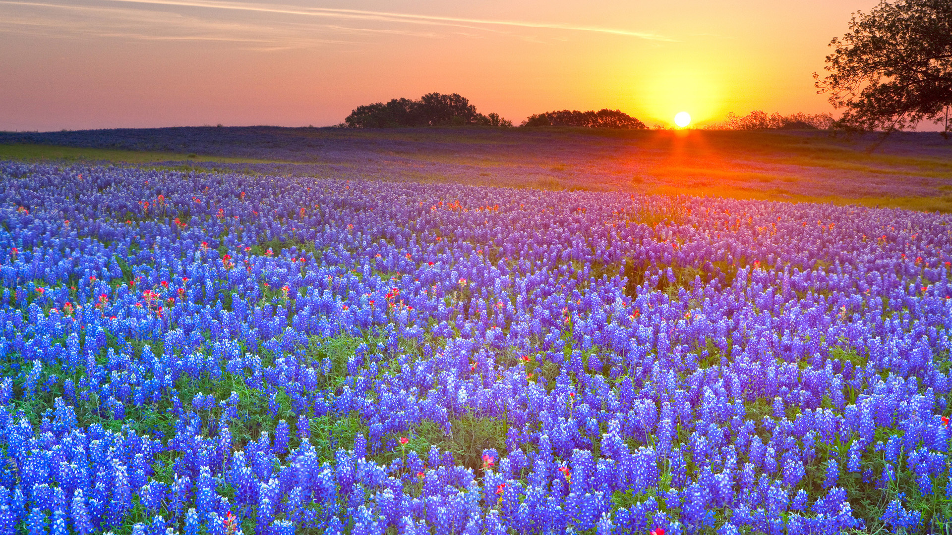Beautiful Texas Wallpaper