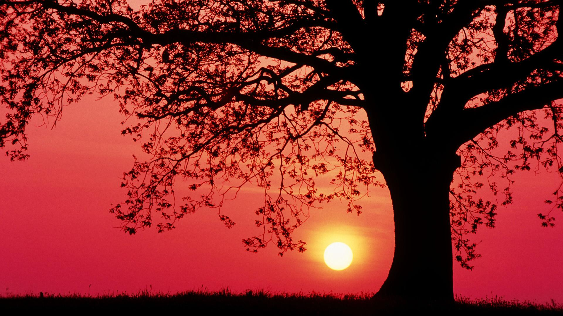 Beautiful Tree Silhouette