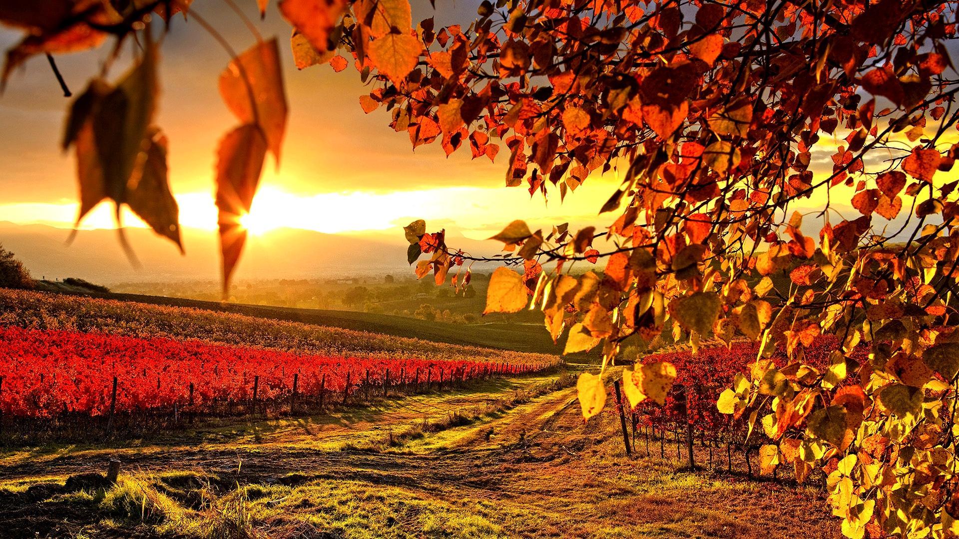 Beautiful Vineyard Wallpaper