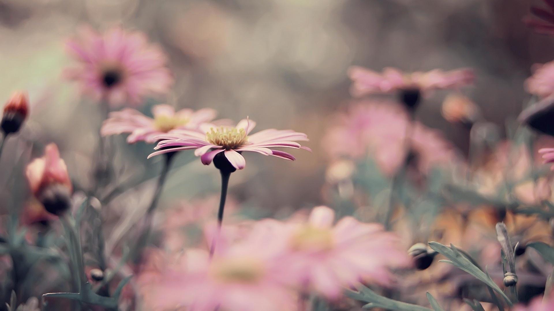 Beautiful Vintage Flowers