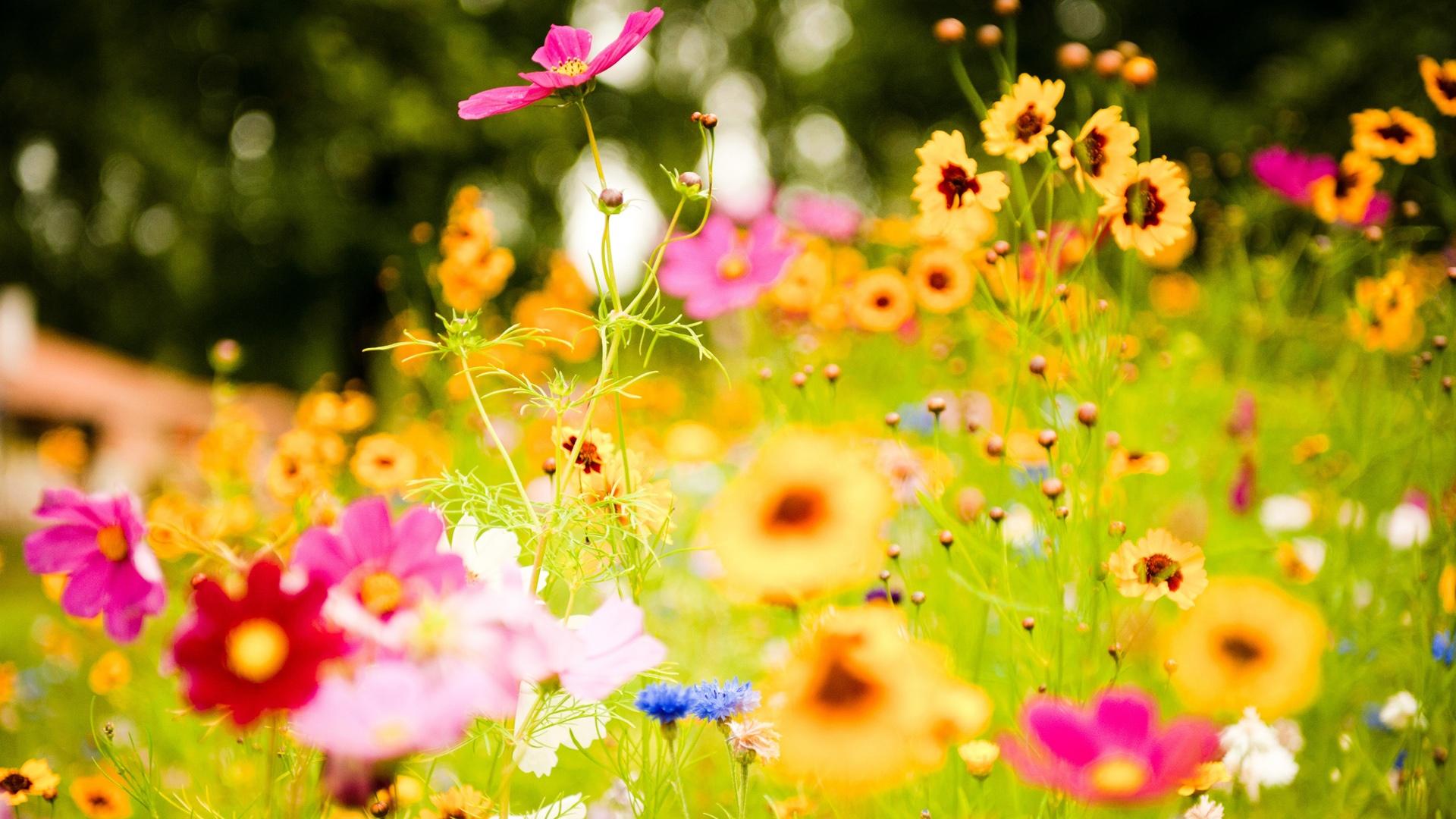 Beautiful Vivid Flowers