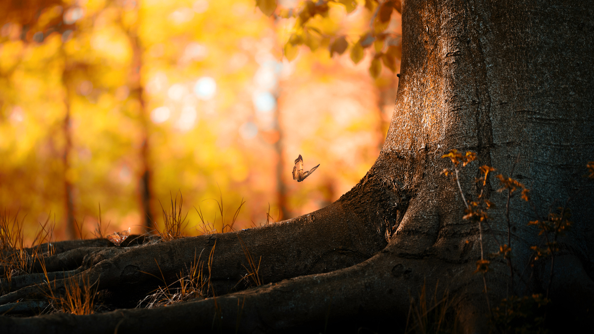 3d Hd Wallpaper 1366x768: Butterfly Wood Beautiful Colored High Definition Wallpapers Hd 1920x1080px