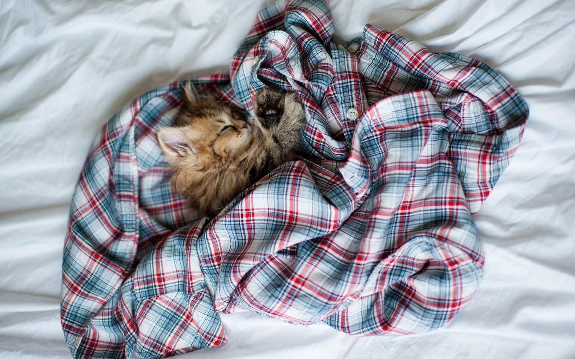 Bed Shirt Kitten Cat