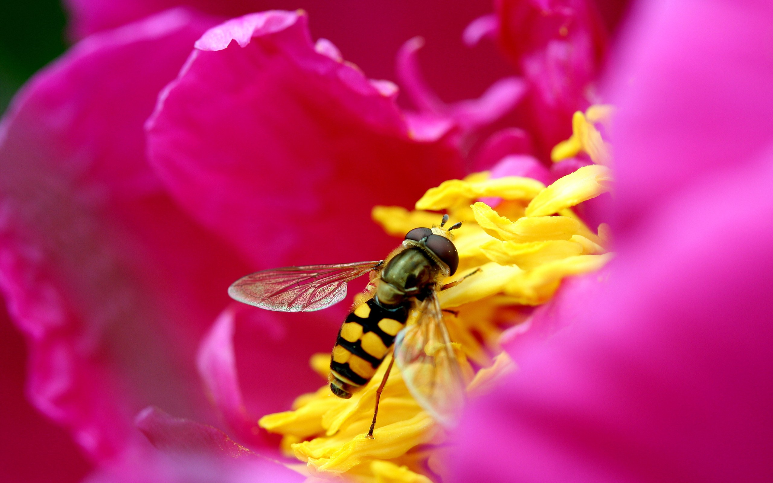 bee picking up nectar pink flower