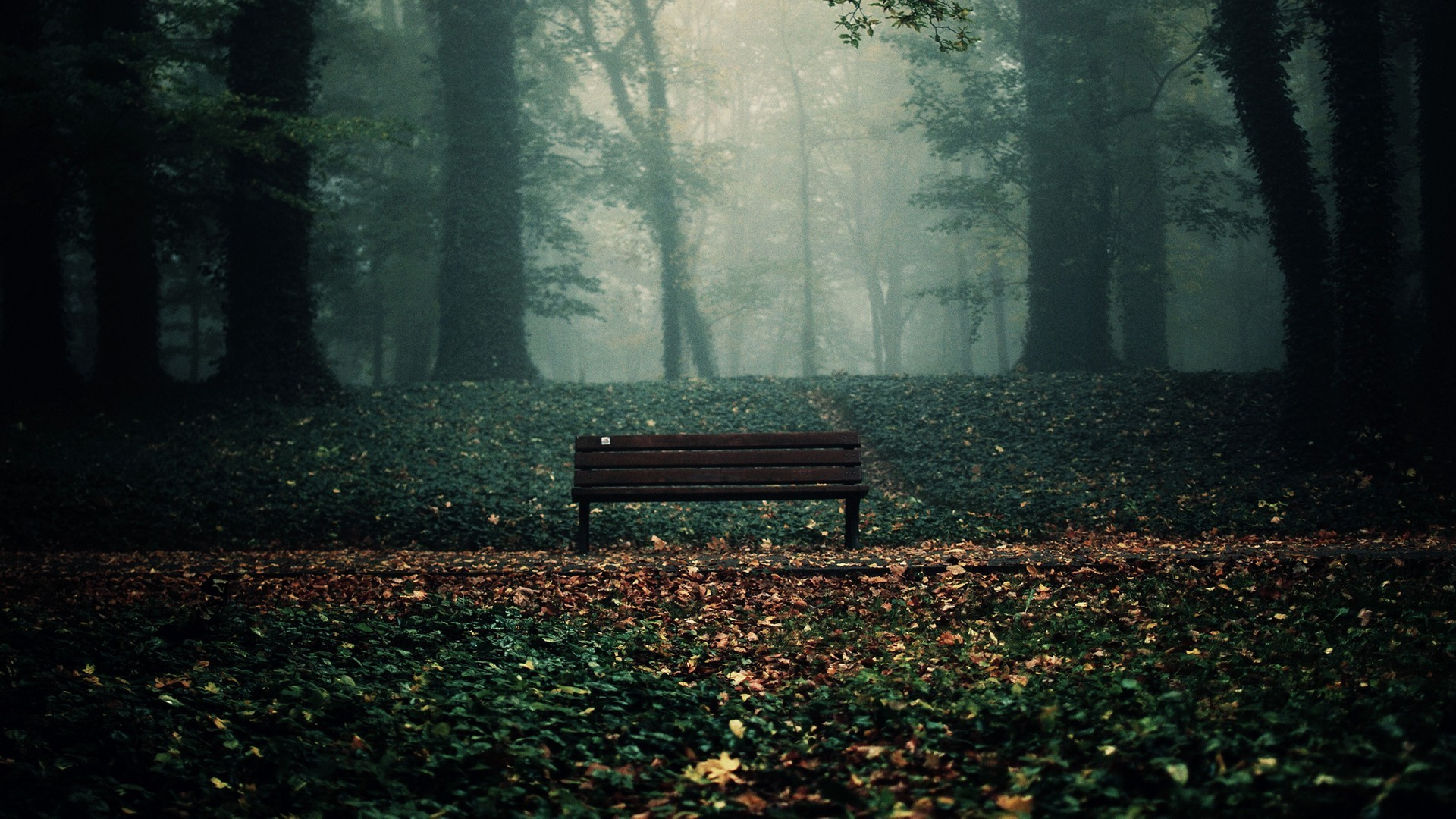 Bench In Woods Wallpaper