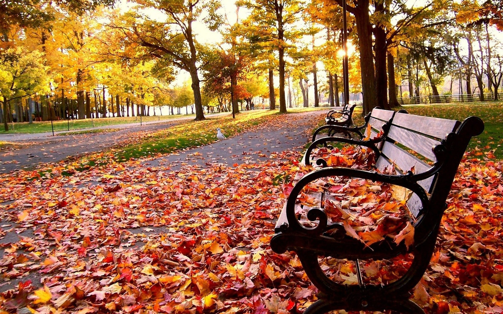 Autumn Wallpaper Leaves Leaf Fall Trees Bench Park Hd 1920x1200px