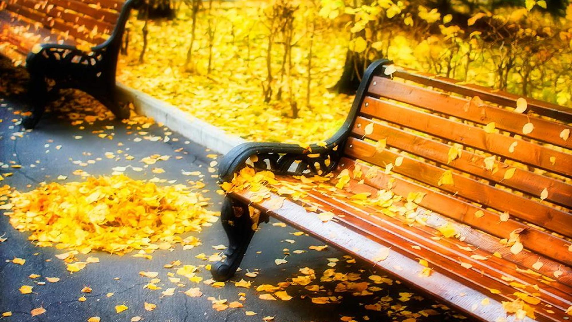 Wallpaper Tags: red yellow park fall leaves bench autumn