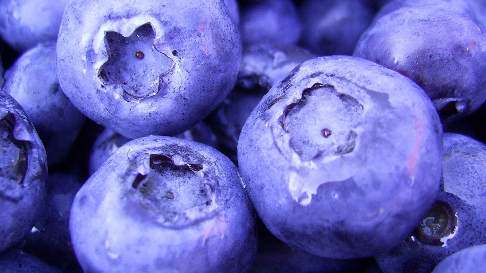... Image Food, berries, blueberries, close-up, food, berries, blueberry ...