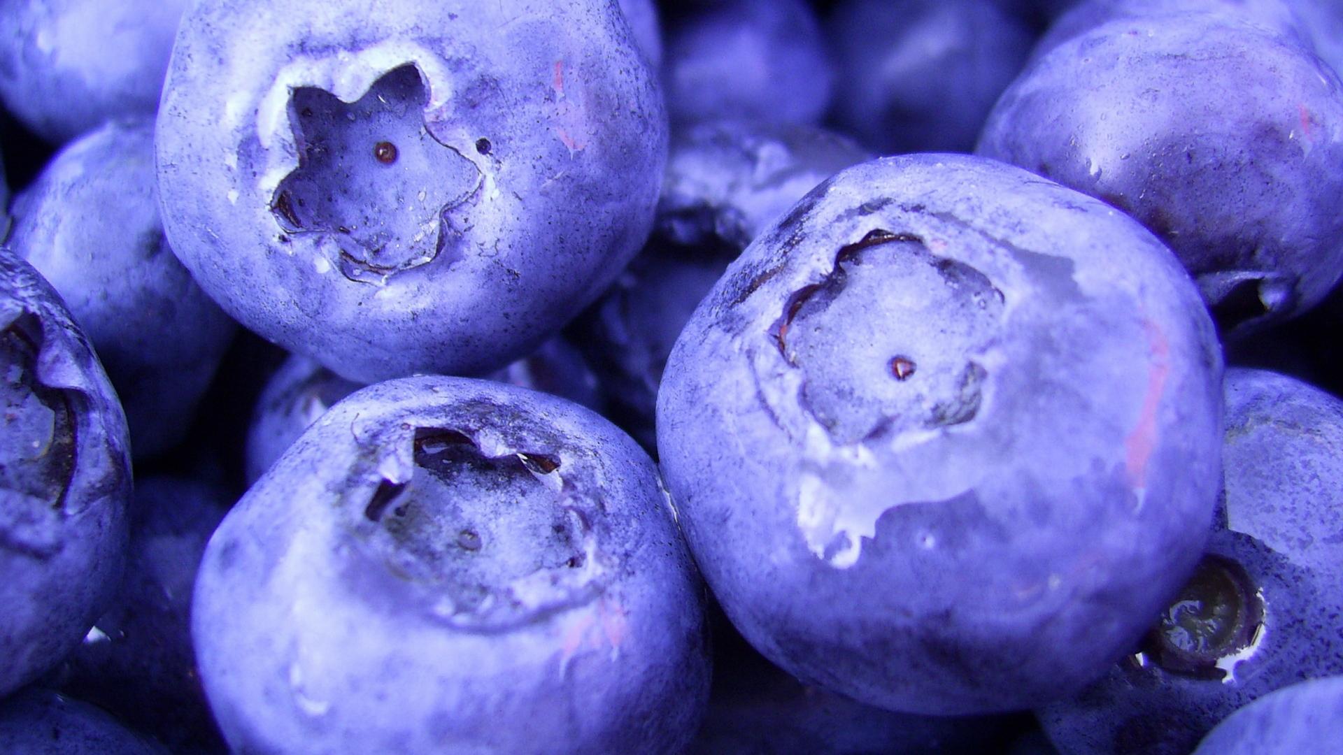 Berries Food Close-Up