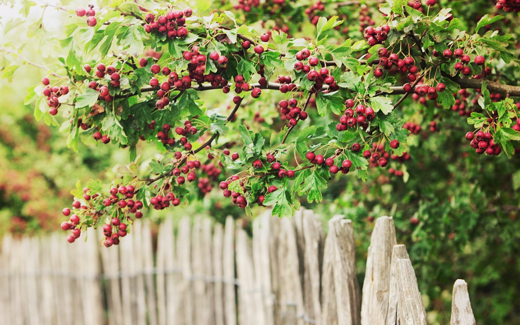 Berries Nature Fence
