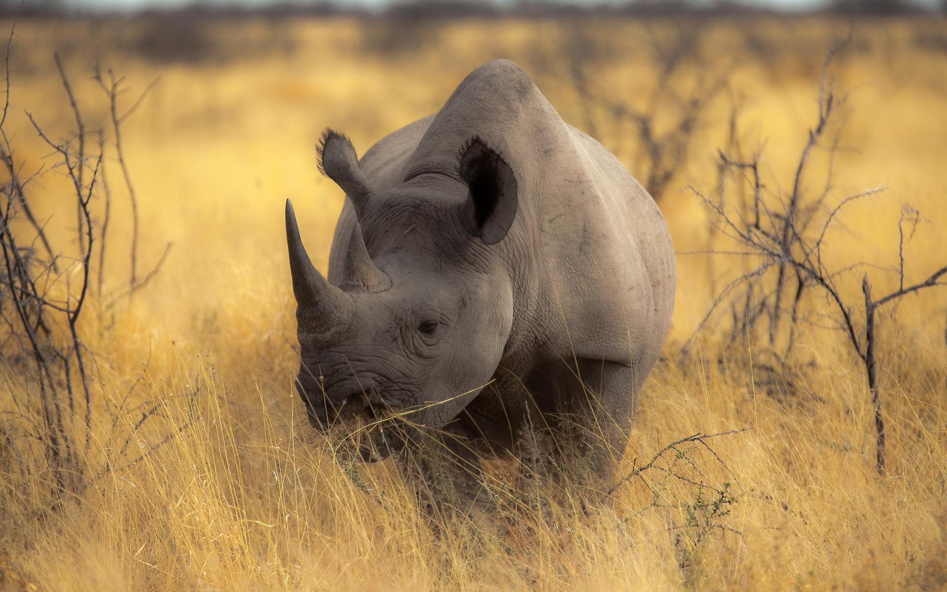 Best Rhino Wallpaper