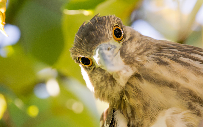 Big bird eyes
