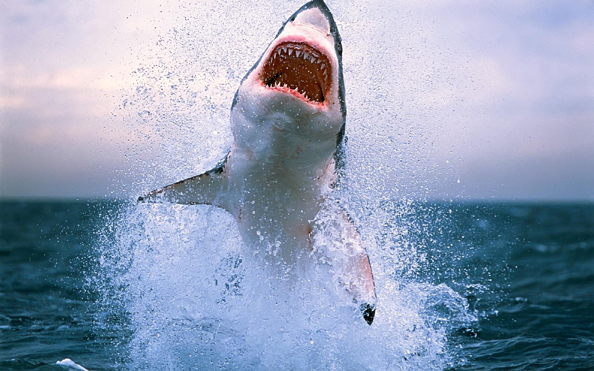 Download Big Shark's Jump — 1920x1200