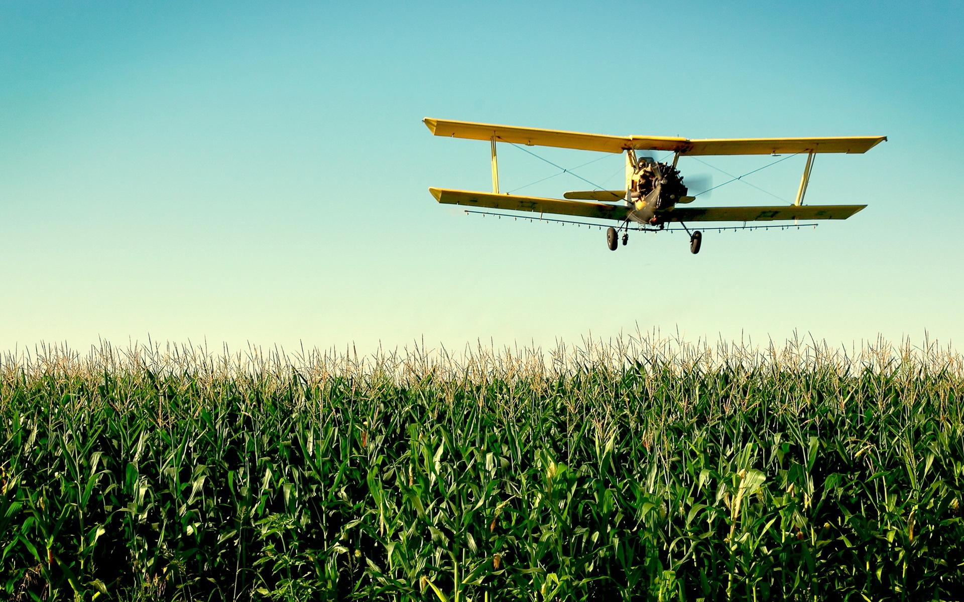 Biplane Cornfield