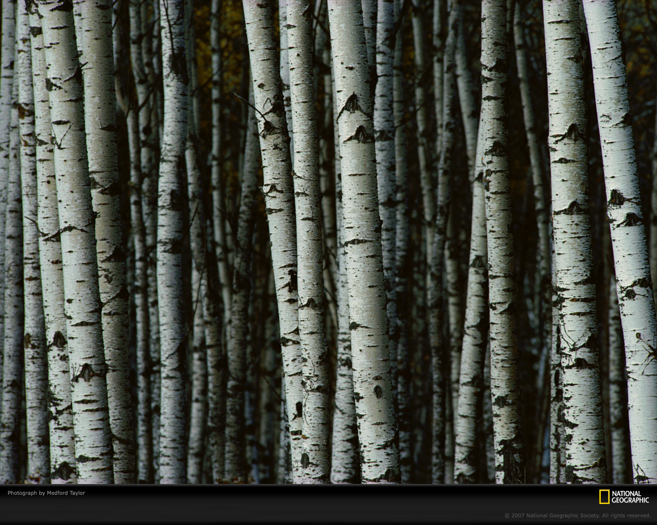 1280 x 1024 pixels—best for larger/widescreen monitors