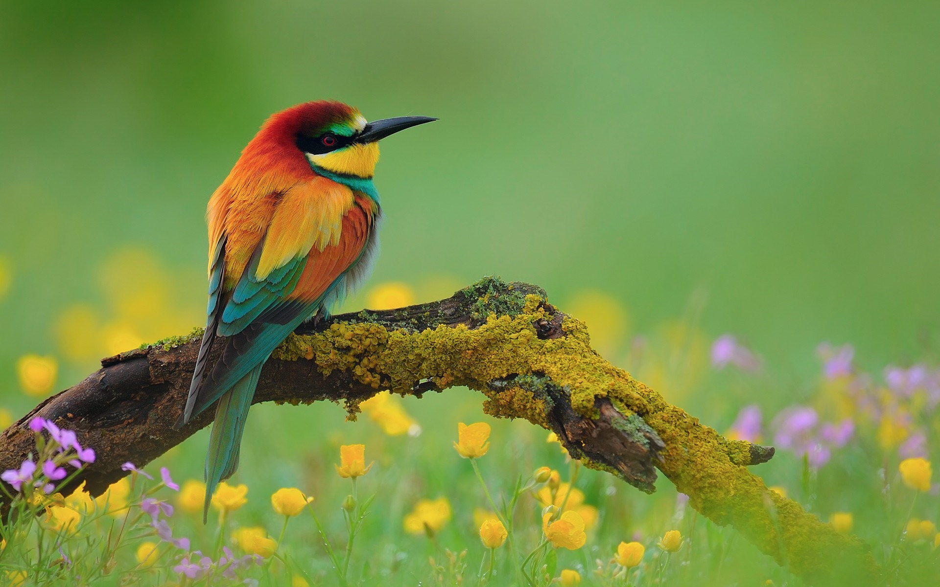 Bird Bee-Eater Nature Flowers