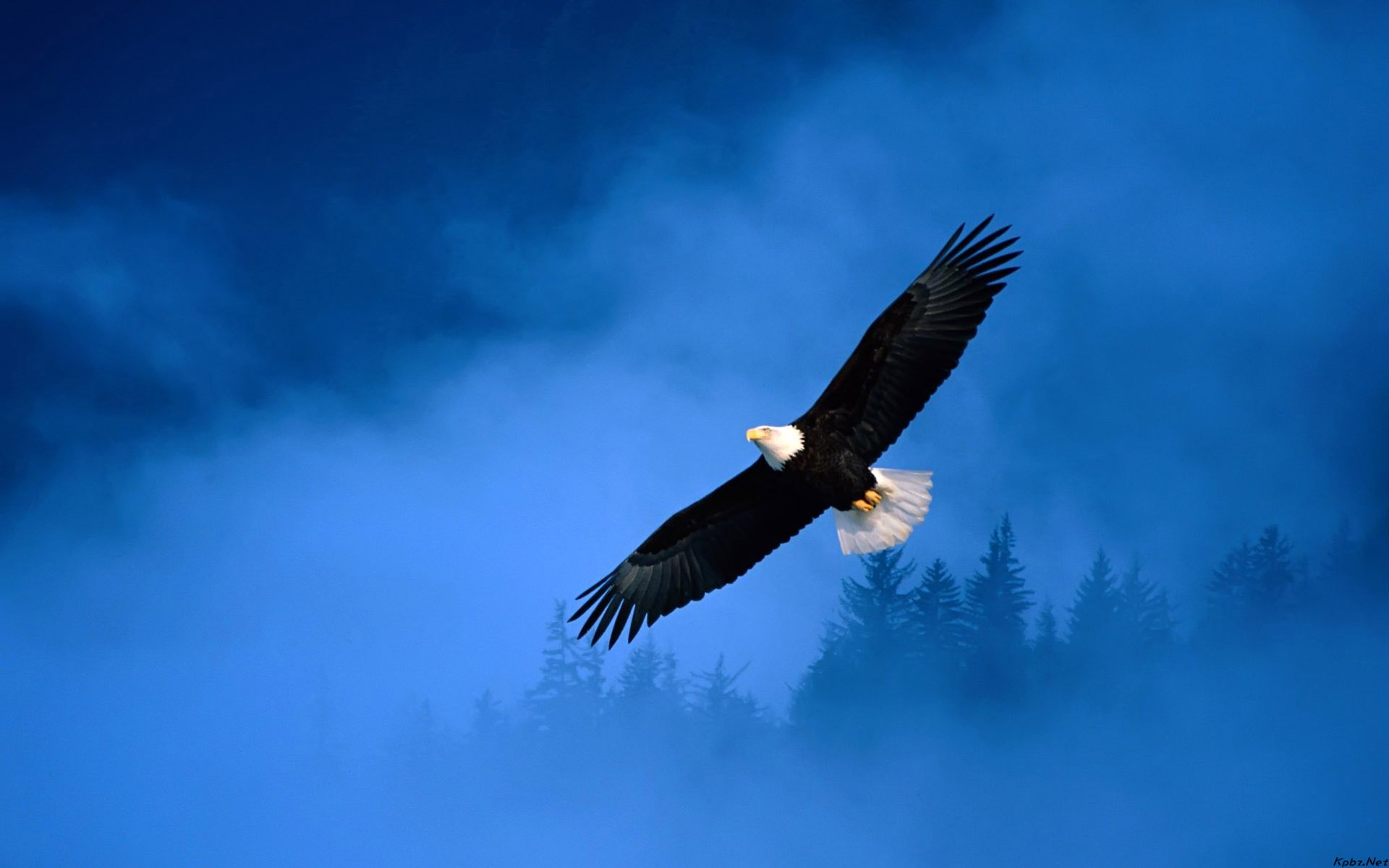 Image: http://www.desktopwallpaperhd.net/wallpapers/9/4/eagle-bird-sky-92580.jpg