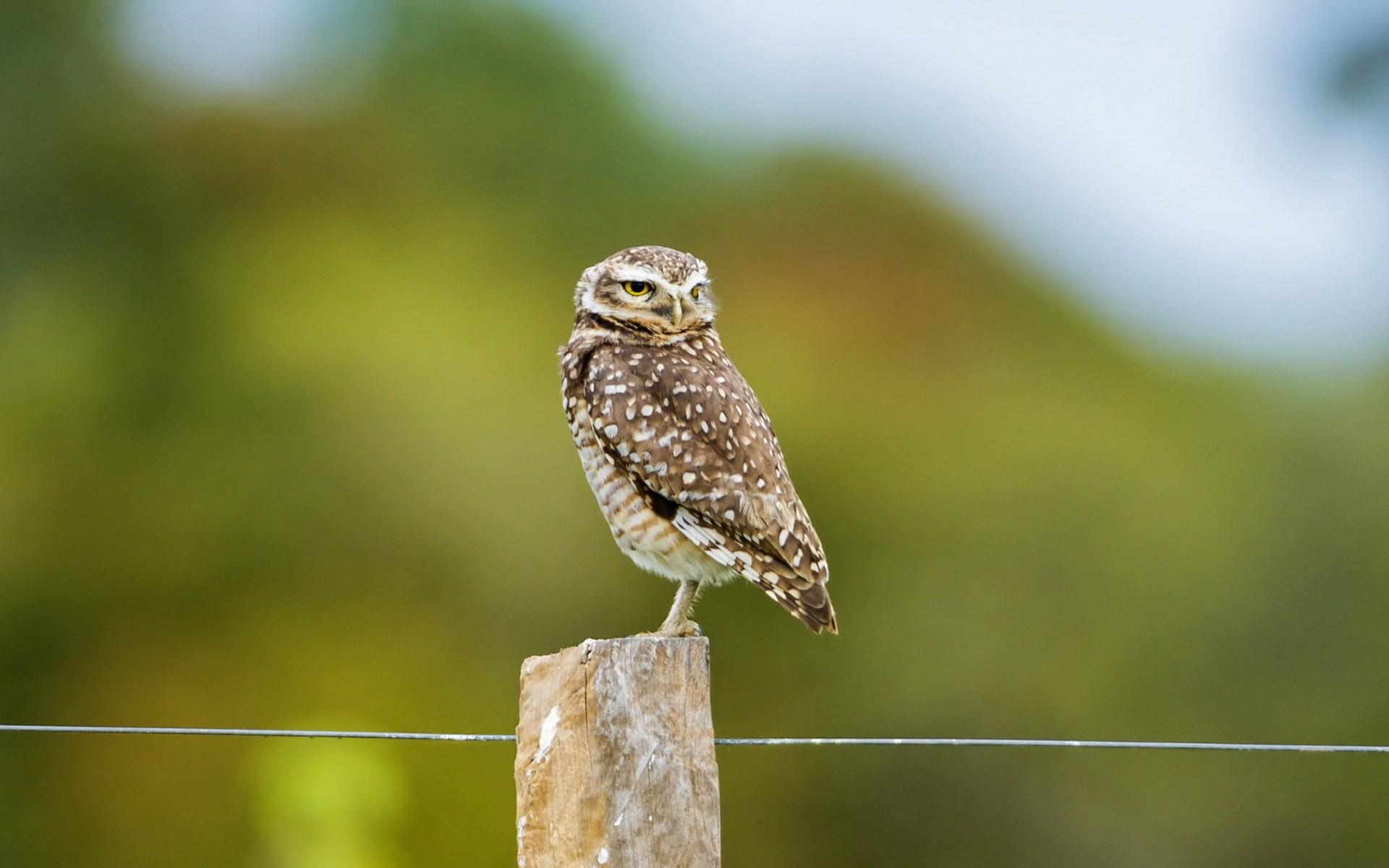 Bird Fence Owl Photo