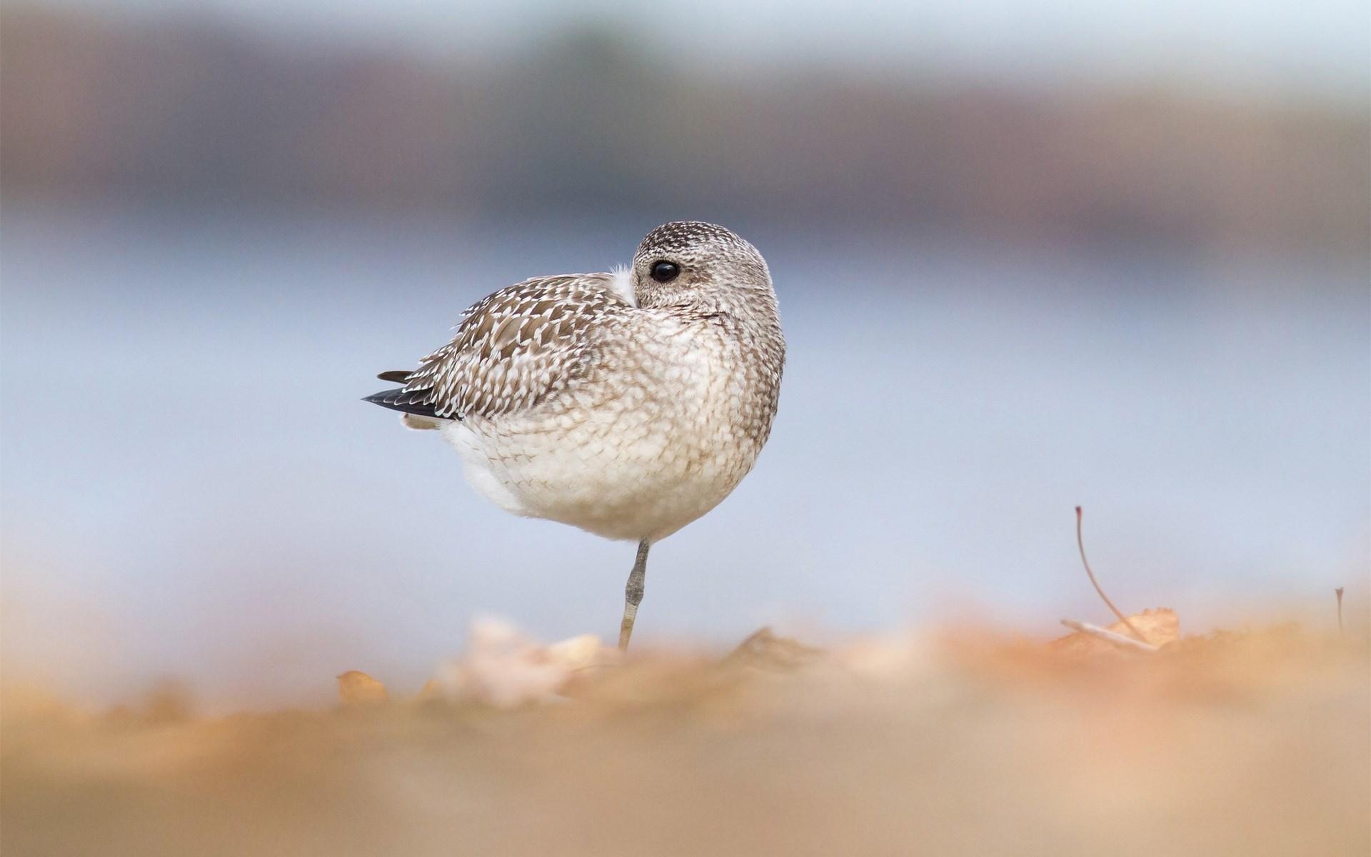 Bird Focus Nature