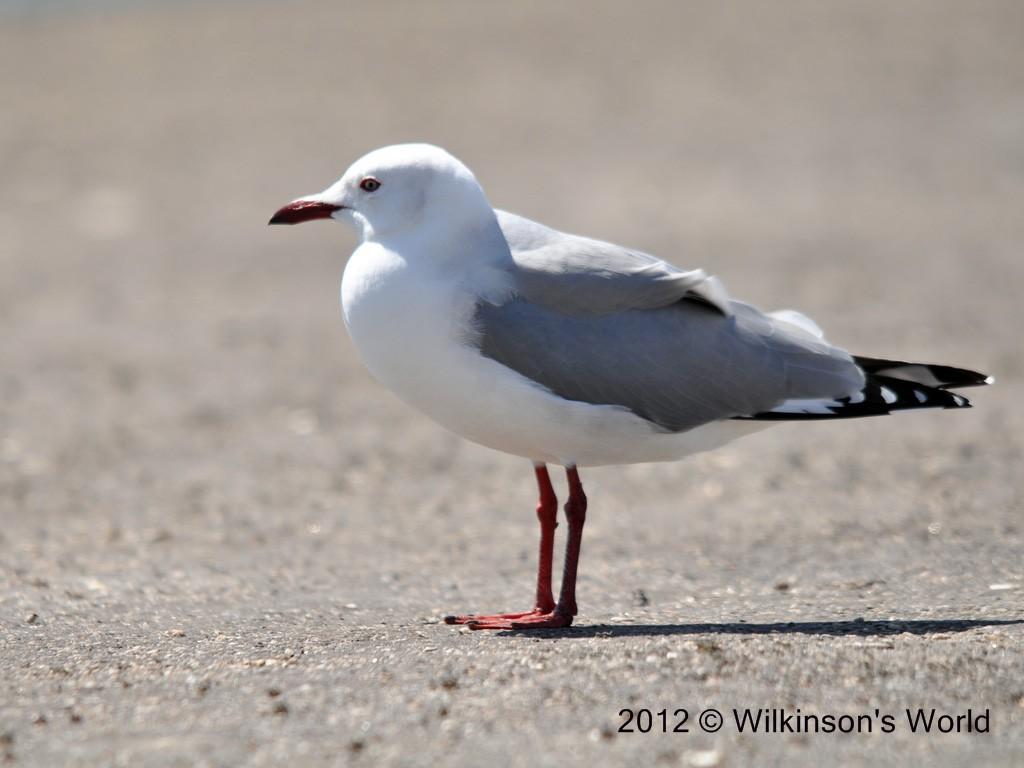 Bird Gull Sign