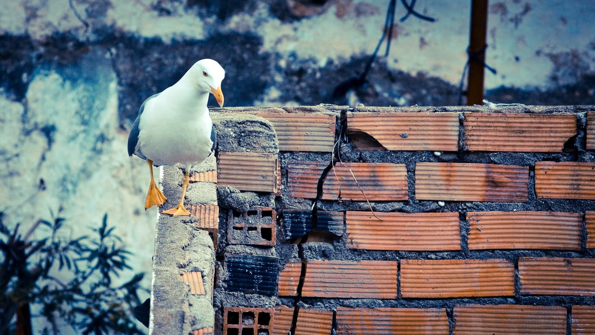 Bird Gull Wall