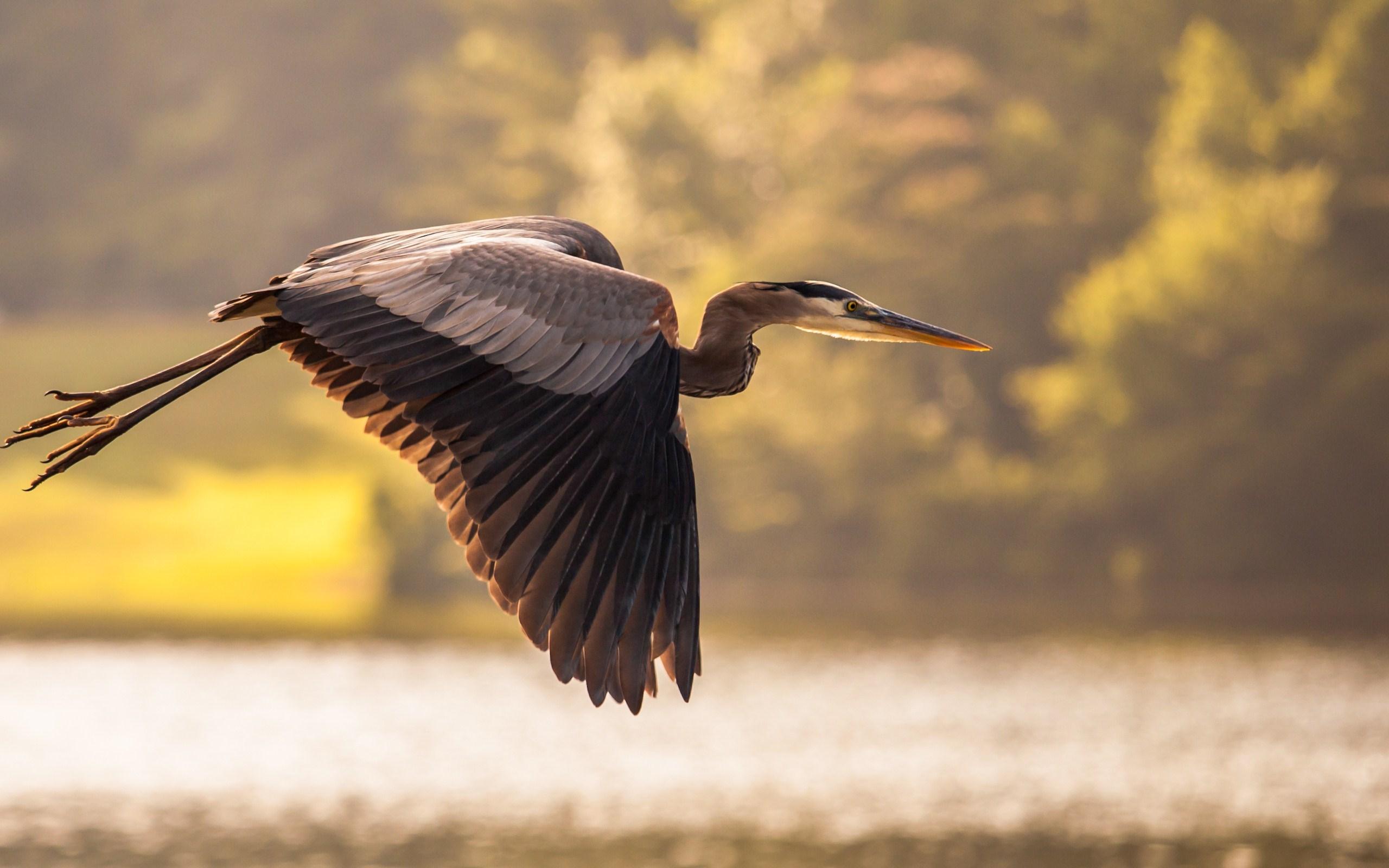 Bird Heron Flight