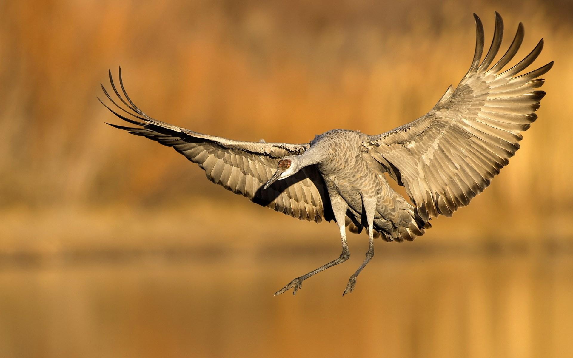 Bird Lake Nature