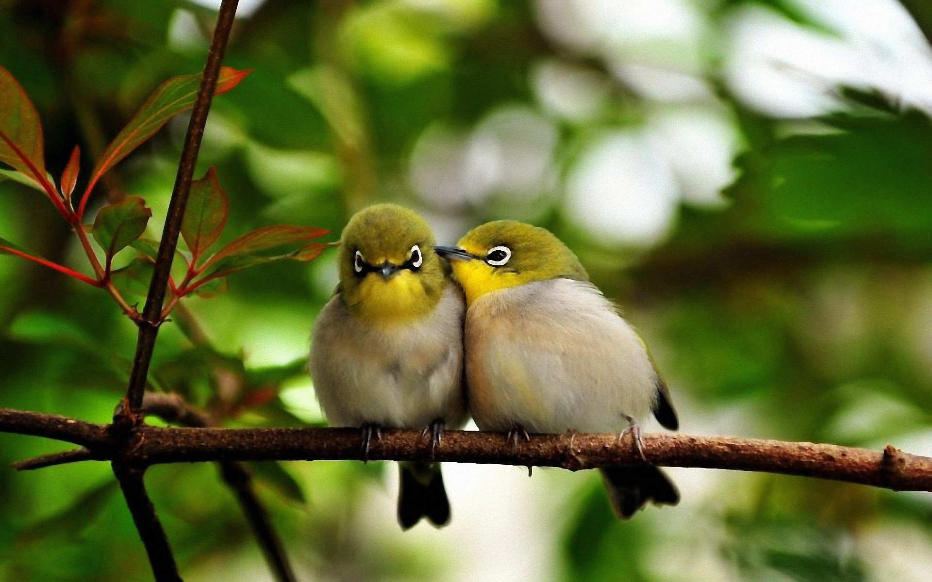 """Not only does Whitman suggest that the bird is his brother, but he suggests also that the bird is """"sad"""" (line 9), lending to the bird an emotive feeling ..."""